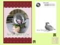 ポストカード 桜文鳥 ヒナ3