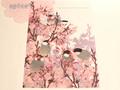 クリアファイル 桜と桜文鳥