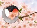ミニ便箋「さくらサクラ桜文鳥」