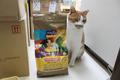 ハロー アダルトカロリーオフ ヘルシーサーモン(グレインフリー) 1才以上の成猫の健康維持・体重管理 1.6㎏