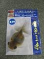 金魚三昧 第2号