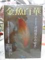 金魚百華 02