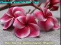 プルメリアのベアルート発根苗 'Kled Tabtim' 栽培セット(希少種・スリット鉢・プルメリア専用培養土つき・Premium品種)