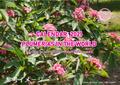 【世界の名花プルメリアが楽しめるカレンダー】●早割予約● 2021年カレンダー PLUMERIAS IN THE WORLD 2021 【12月上旬頃から発送】