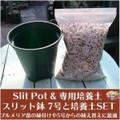 【大きなカット苗用】プルメリア専用培養土とスリット鉢のセット(7号スリット鉢)