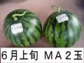 千葉県富里産 大玉西瓜(MA・2玉) 6月上旬収穫