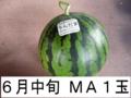 千葉県富里産 大玉西瓜(MA・1玉) 6月中旬収穫