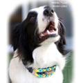 パラコード手編み首輪#143 小型犬〜大型犬向き ハーフチョークスリップ