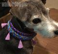 パラコードで編む首輪 #249 小型犬〜超大型犬 ハーフチョークマーティンゲール