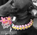 パラコード手編み首輪 #271 小型犬〜中型犬 ハーフチョークマーティンゲール