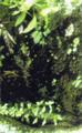 Oliwa - Selva Primaria