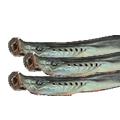 乾燥八ツ目鰻 中
