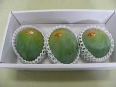 キーツマンゴー 2kg