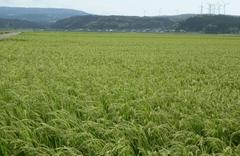 【お買い得品】産地直送 秋田県産米 ひとめぼれ 10kg-G378
