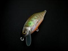 攻HV50S                                            手割サザエ岩魚