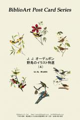 オーデュボン 野鳥のイラスト特選(4)