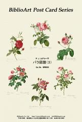 ルドゥーテ 「薔薇図譜」(3)