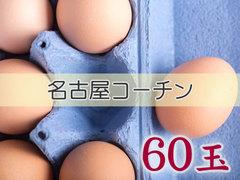 たまごづくし C-③ 名古屋コーチン 60玉