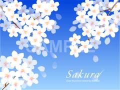 No595 満開の桜 【AI】