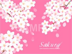 No596 満開の桜 ピンク 【AI】