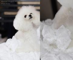Manner Lingerie Allure(マナーランジェリーアリュール)♪☆Pure Snow☆