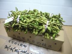 丹波・黒大豆の枝豆  3Kg(予約限定品)     枝付き・バラ入れ