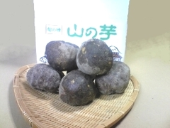 丹波篠山特産 山の芋   2Kg(予約限定品)