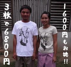 象Tシャツ/3枚セット
