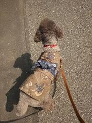 【犬用】男前浴衣