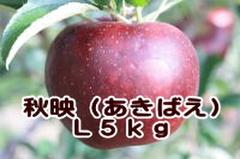 秋映(あきばえ) L 5kg