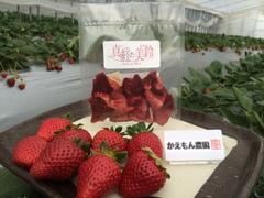 ドライ イチゴ「真紅の美鈴」