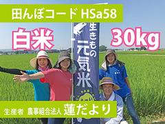 生きもの元気米(減農薬)田んぼHSa58の白米30kg コシヒカリ