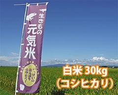 生きもの元気米(減農薬)・田んぼおまかせ白米30kg コシヒカリ