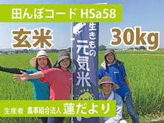 生きもの元気米(減農薬)雨がえるの田んぼ(HSa58)の玄米30kg コシヒカリ