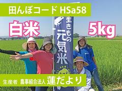生きもの元気米(減農薬)雨がえるの田んぼ(HSa58)の白米5kg コシヒカリ