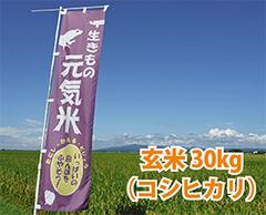生きもの元気米(減農薬)・田んぼおまかせ玄米30kg コシヒカリ