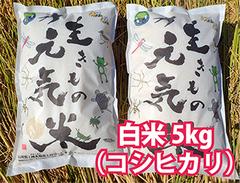 生きもの元気米(減農薬)・田んぼおまかせ白米5kg コシヒカリ