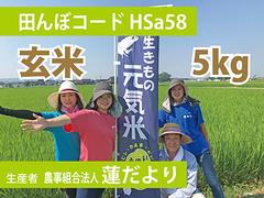 生きもの元気米(減農薬)田んぼHSa58の玄米5kg コシヒカリ