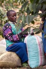 タンザニア モンデュール農園 200g