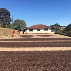 ブラジル サンタアリーナ農園100年ブルボン 100g