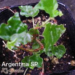 Argentina SP  アルゼンチンsp