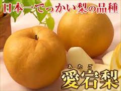【冬のフルーツギフト】あたご梨 4玉(1玉あたり約900g以上)【送料込】