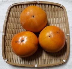 自然栽培 富有柿