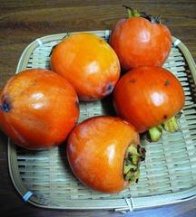 自然栽培 水島柿