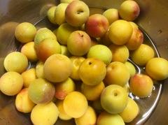 自然栽培の完熟梅