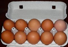 平飼い卵 (10個入り)