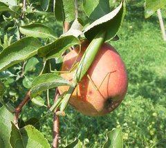 果樹の栽培方法について