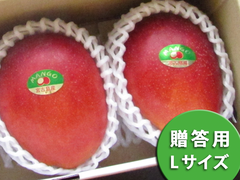 アップルマンゴー Lサイズ 1kg