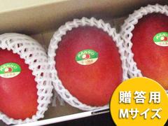 アップルマンゴー Mサイズ 1kg