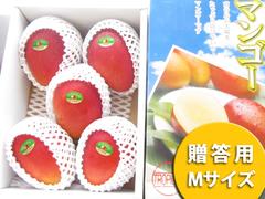 アップルマンゴー Mサイズ 2kg